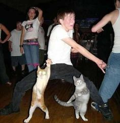 Never challenge Ninja cats to a dance-off. Never challenge Ninja cats to a dance-off. Never challenge Ninja cats to a dance-off. Animal Memes, Funny Animals, Cute Animals, Party Animals, Funniest Animals, Wild Animals, Crazy Cat Lady, Crazy Cats, Funny Cute