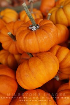 Engagement Ring for an autumn wedding, placed on mini-gourds