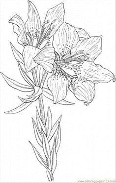 Daisy Flower Coloring Pages  free printable coloring page Daisy 6