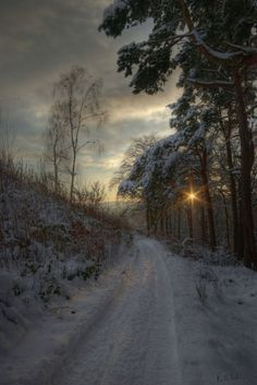 Pirn pines | Ranald Dods