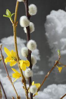 Beat's Digitale Fotografie Dandelion, Flowers, Plants, Art, Art Background, Dandelions, Florals, Kunst, Planters