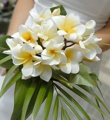 plumeria and palm - perfect for a wedding in the tropics!