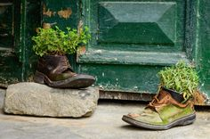 Diese Schuhe sind alt, schimmelig und übermäßig abgenutzt durch die Jahre genauso wie die große grüne Tür hinter ihnen. Die rustikale Schuhe als Kraut Pflanzer und eine Kulisse der gemütliche grüne Tür sorgen für einen idyllischen Charme.