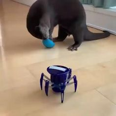 Cute Little Animals, Cute Funny Animals, Funny Cute, Funny Animal Videos, Funny Animal Pictures, Animal Antics, Animal Quotes, Otters, My Animal