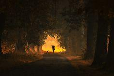 Photo listen! by bob van den berg on 500px
