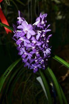 Orchid #FLORIA2014 #Putrajaya