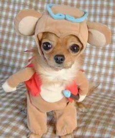 25 Adorable Pet Costumes