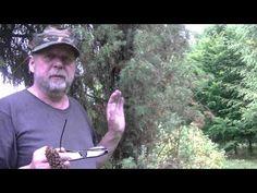 Naturalne leki - YouTube Youtube, Survival, Youtubers, Youtube Movies