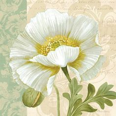 ❤ =^..^= ❤     Pastel Poppies III | Pamela Gladding