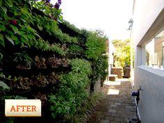 Vertical Garden Ideas Australia medibank building docklands melbourne -vertical garden green wall
