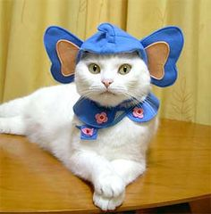 kittens in costumes | 15 hilarious cats in costumes - elephant cat costumes