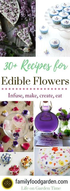 53 Best Edible Flowers Images In 2019 List Of Edible Flowers Shot