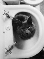 """""""cats Can Work Out Mathematically The Exact Spot To Sit To Cause The Most Inconvenience."""" –pam Brown"""