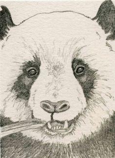 ACEO ATC Panda Bear Wildlife Art Original Pencil Painting-Carla Smale #Realism