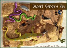 desert life Bring a bit of the outdoors in with this easy to assemble desert sensory bin. Sensory Tubs, Sensory Boxes, Sensory Activities, Sensory Play, Sensory Diet, Baby Sensory, Desert Biome, Desert Animals, Wild Animals