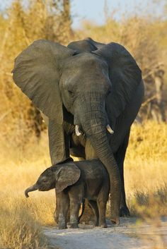 Mother & Baby Elephant