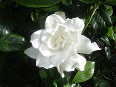 exotische zimmerpflanzen schöne zimmerpflanzen blühende zimmerpflanzen