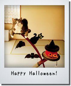 maru. halloween, 2012 私信