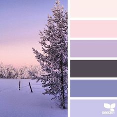 today's inspiration image for { winter wishes } is by @arctic_stories... thank you, Renate, for another amazing #SeedsColor image share! #MerryChristmas