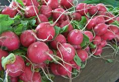 Learn how to grow radishes in your garden with our easy to follow gardening guide! Only 3-4 weeks to harvest straight from seed!
