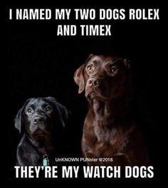 Rolex and Timex: watch dogs – dogmemes Cheesy Jokes, Corny Jokes, Funny Puns, Dad Jokes, Hilarious, Funny Stuff, Dog Stuff, Dnd Funny, Bad Puns