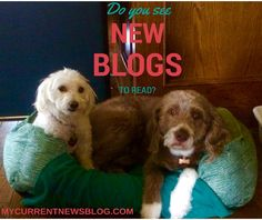 #Bloggers get to network at Meet and Greets. You can too if you click the link. Mycurrentnewsblog.com #blogging