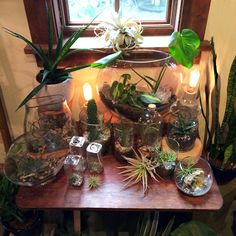 Aeriums and Terrariums at Pistils Nursery