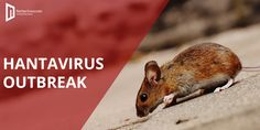 Another Deadly #Hantavirus has hit the world caused due to the urine, saliva, and feces of rodents. This virus is non-communicable which means it won't transmit from humans to humans. However, one life in china has been taken with the hit of hantavirus. Although the virus has hit recently so no vaccination has yet been developed to curb this virus. #noncomunicable #virusoutbreak #threattolife #prevention One Life, Digital Marketing Services, Rodents, Social Media, China, World, Animals, Animales, Animaux