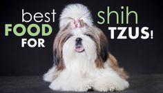 22 Best Shih Tzu Food Images On Pinterest Dog Recipes Gatos And
