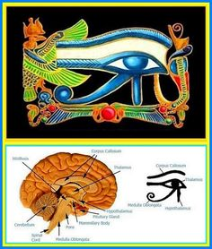 """mu-shaman: """" The Eye Of Horus is an Egyptian symbol of protection, royal power and good health. Horus was the ancient Egyptian sky god who was usually depicted as a falcon. His right eye was associated with the sun RA. RA was the ancient Egyptian sun. Ancient Aliens, Ancient Egypt, Ancient History, Egyptian Eye, Egyptian Symbols, Arte Ganesha, Master Of The Universe, Spiritual Eyes, Pineal Gland"""