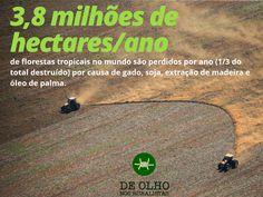 Várias etnias ganham representação nas Câmaras e até em prefeituras; entre os eleitos estão vereadores Terena, no MS, da região onde há mas violência contra os povos originários no Brasil