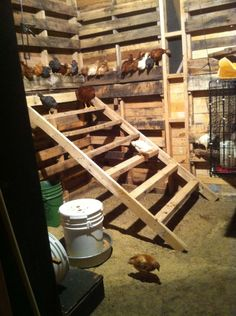 I will have 8 pullets as well. How wide is your poop board? How far apart are the roosts? Roosts are almost wide and they are at. Inside Chicken Coop, Chicken Shed, Chicken Coup, Chicken Garden, Best Chicken Coop, Chicken Lady, Chicken Coop Plans, Building A Chicken Coop, Chicken Perches
