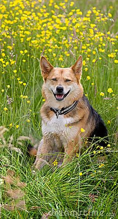 Happy dog in field of flowers by Nivi, via Dreamstime