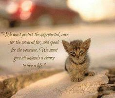 We must protect the unprotected . // cat quotes to live by Animals And Pets, Baby Animals, Funny Animals, Cute Animals, I Love Cats, Crazy Cats, Cute Cats, Cat Quotes, Animal Quotes