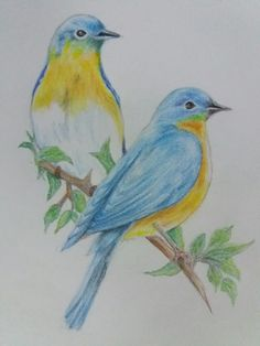 Colored Pencil drawing by S.Veerakannan