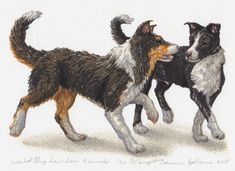 This is my wonderfully amazing first Border Collie Laika as a pup, and my absolutely lovely second Border Collie Varney… far more interested in his people, and cars Border Collie, Love Him, Pup, Moose Art, Cars, Friends, Amazing, Artwork, Artist