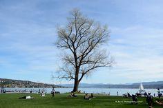 View from Zurich, Switzerland of Lake Zurich and the Swiss Alps.
