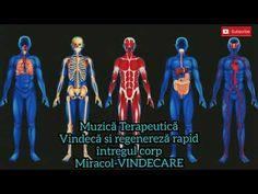 Muzică Terapeutică - Frecvența tuturor vindecărilor - Regenerarea întregului corp - MIRACOL - YouTube Youtube, Movies, Movie Posters, Musica, Films, Film Poster, Cinema, Movie, Film