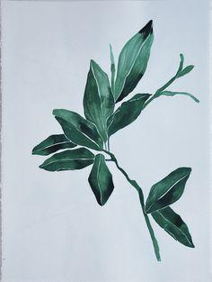 green magnolia   bowerbird