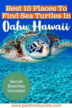 Find out where the top 10 places are to see and swim with sea turtles in Oahu Hawaii are! Well-known and secret beaches included. Hawaii Travel, Thailand Travel, Italy Travel, Oahu Hawaii, Hawaii Beach, Croatia Travel, Philippines Travel, Beach Travel, Mexico Travel