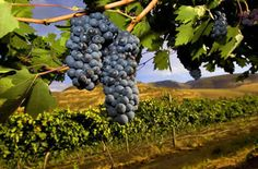 Oregon Wine Tour Limo | Oreogn Wine Tour Party Bus | JMI Limousine