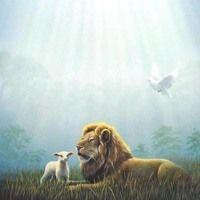 Lion of Judah, lamb and Holy Spirit Dove Prophetic Art. Christian Artwork, Christian Pictures, Lion And Lioness, Lion Of Judah, Lion And Lamb, Tribe Of Judah, Jesus Painting, Jesus Pictures, Lamb Pictures