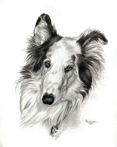 Hailey the Rough Collie Sketch ~ Hand drawn by Genevieve Schlueter. http://www.gensart.net