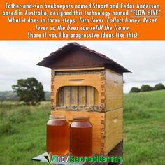 After speaking with a beekeeper: Apparently you have to be really careful with these hive bc they're not very well insulated plus the clear side can cause problems. Wtf Fun Facts, Random Facts, Random Things, Random Stuff, Save Our Earth, Cool Inventions, Save The Bees, Bees Knees, Faith In Humanity