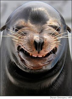 Say cheese ~ this little guy promotes laughter. Love it!