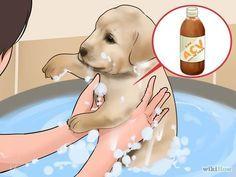 Use Apple Cider Vinegar for Dogs Step 10 Version 3.jpg