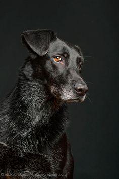 Elke-Vogelsang-dog-portraits-9