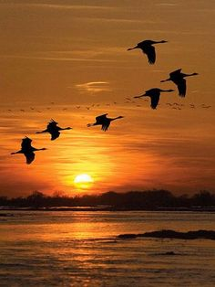 Sandhill crane migration- 20 Reasons We Love Nebraska. #nebraska