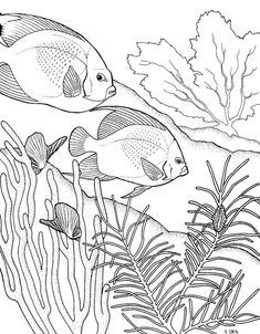 Coral Coloring Pages: Acquaint your kid with the residents of coral reef with our ten coral reef themed coloring pages.