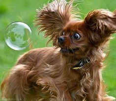 Scared of Bubbles funny cute bubbles dog puppy lol startled scared